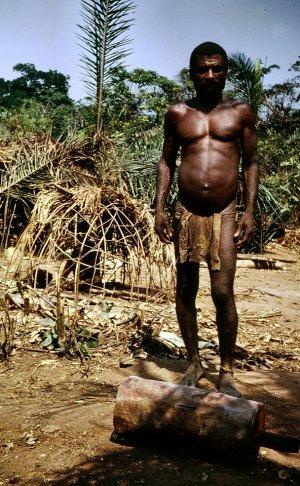 mbuti pygmies essays